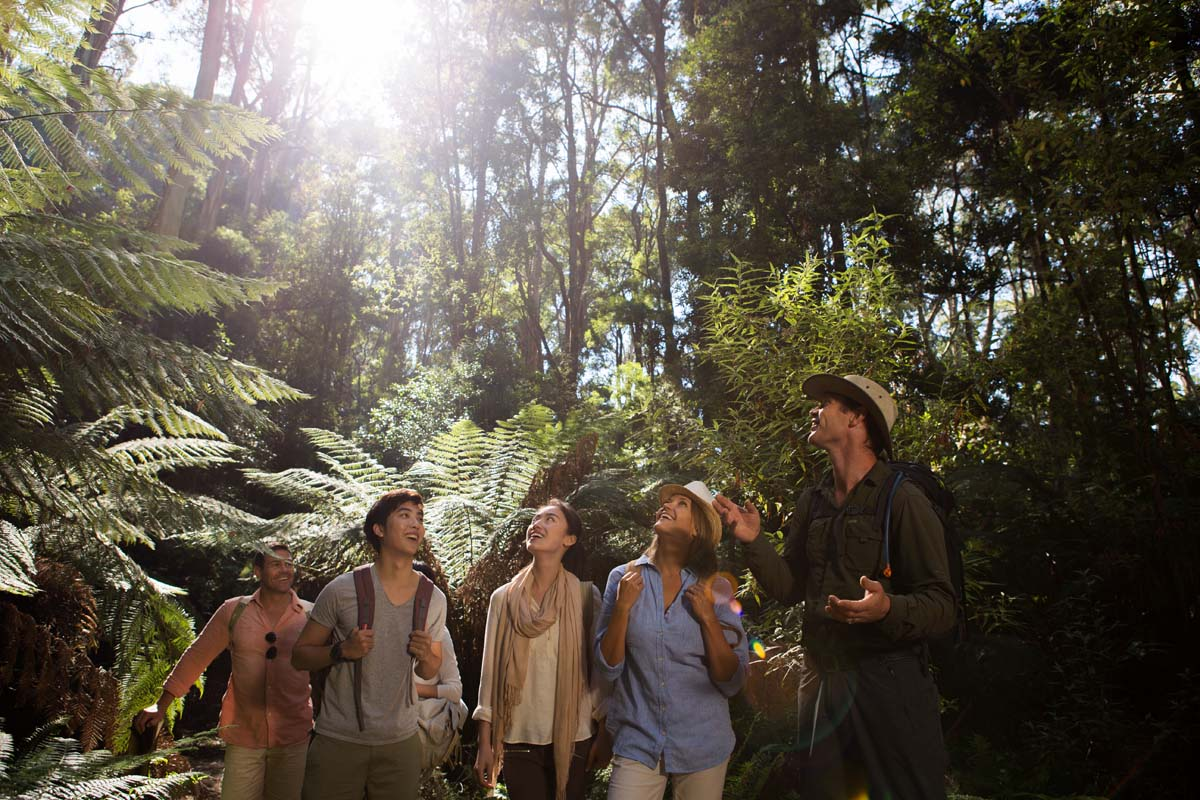 Discover the Australian rainforest with Great Walks of Australia on the Twelve Apostles Lodge Walk in Victoria.