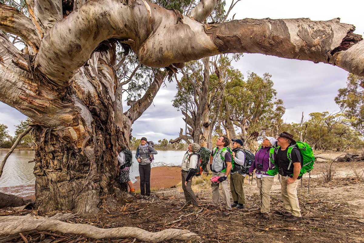 Discover unique Australian landscapes with Great Walks of Australia on the Murray River Walk, South Australia.