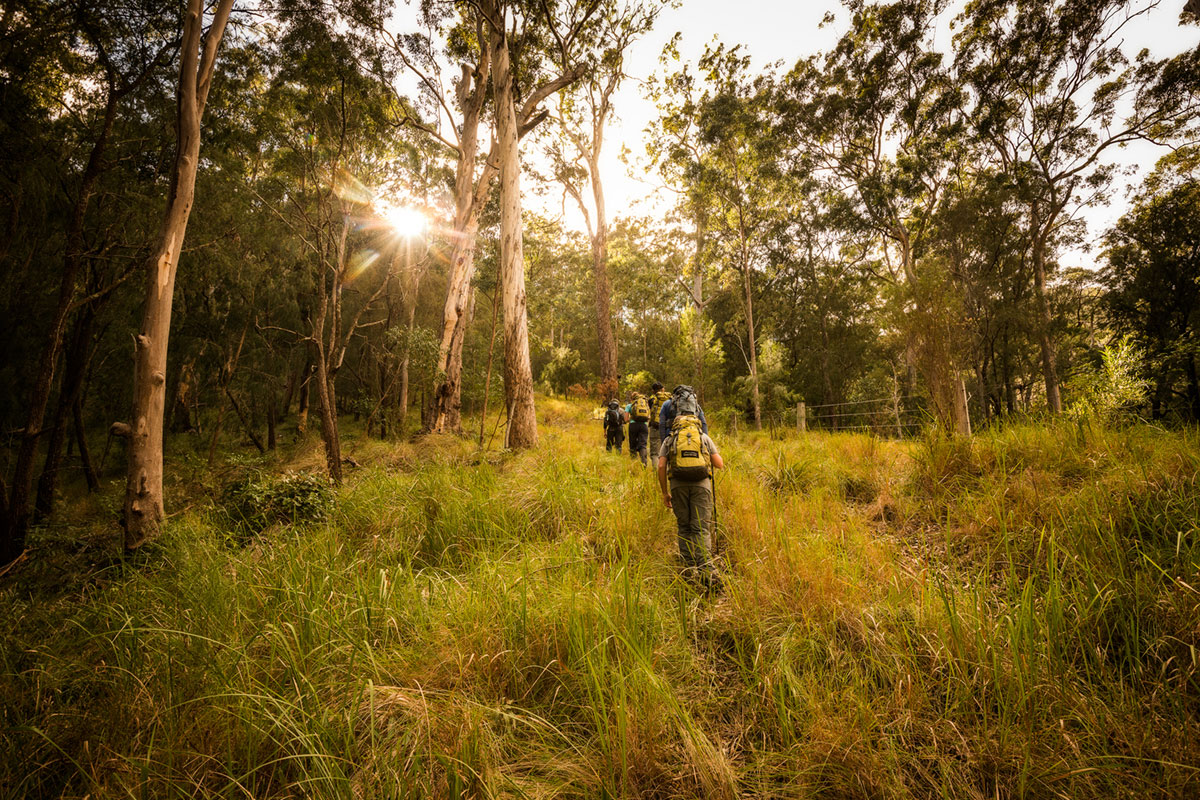Join other walkers on the Scenic Rim Trail in Queensland with Great Walks of Australia.