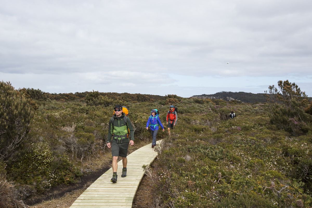 Walk with other walkers on your guided Great Walk of Australia, the Three Capes Lodge Walk in Tasmania.